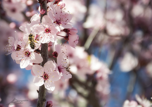 Llega la Primavera 8