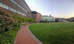 Oval Lawn Springtime Dusk