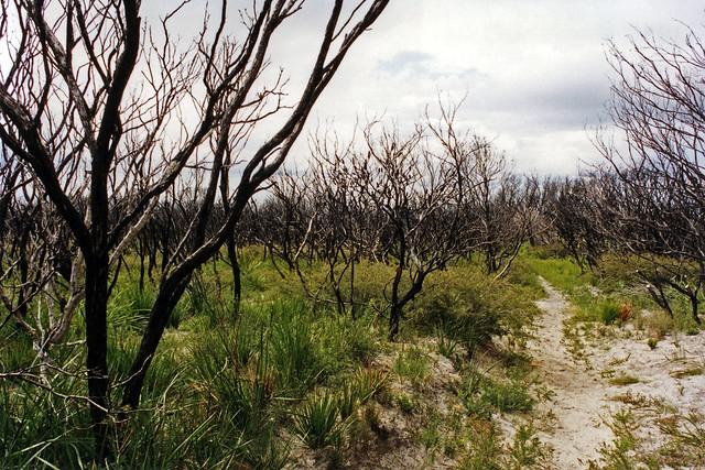 Burnt bushland
