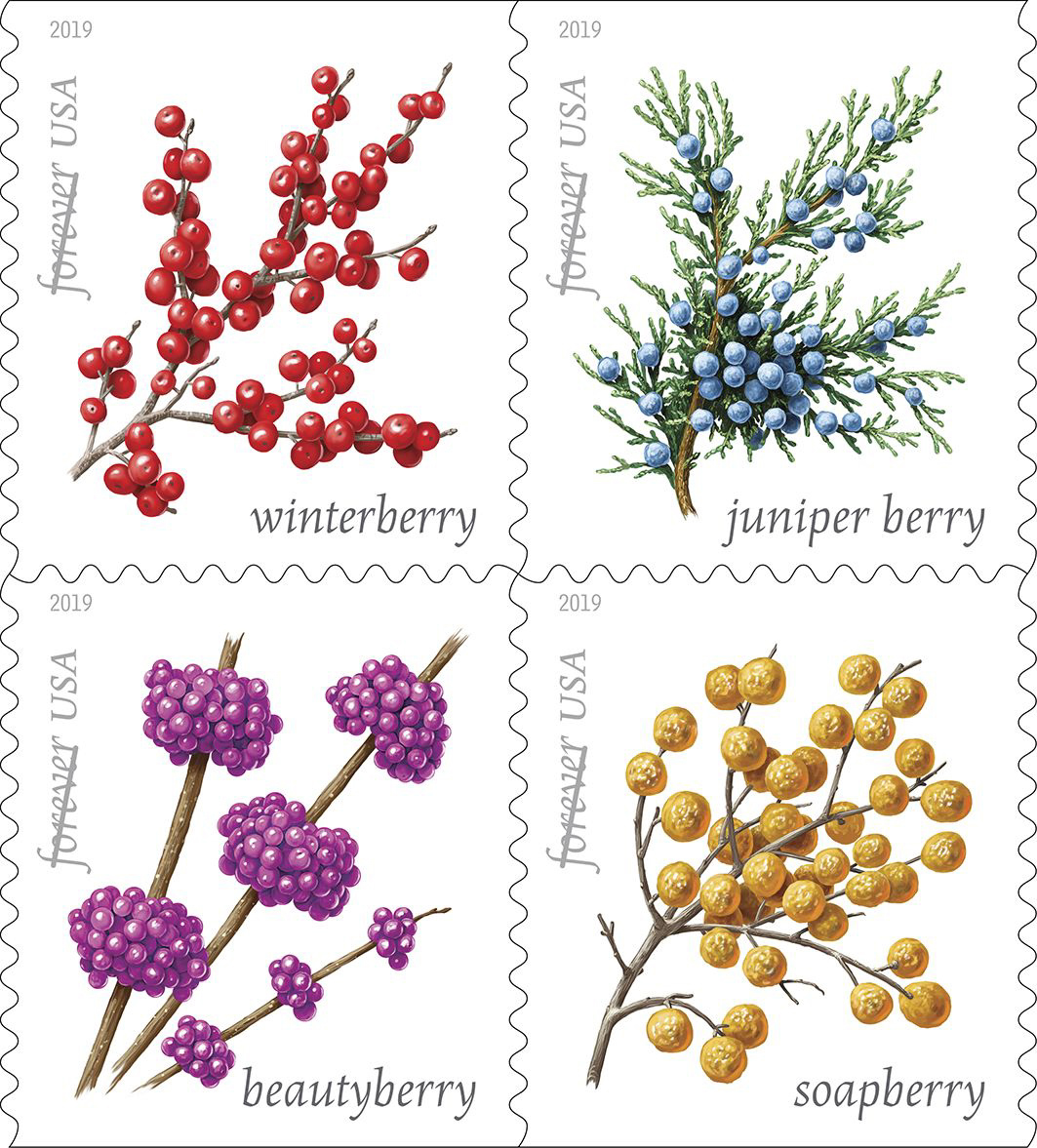 Winter Berries - TBD 2019