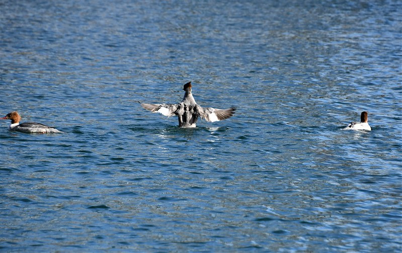 Ducks 26.03 (7)