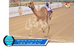 📷 صور سباق اللقايا (الأشواط العامة) ختامي الكويت مساء 10-2-2019