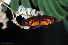 insetos da serrinha - Roca Sales