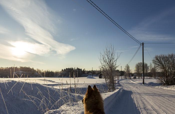 Lähiseutumatkailu talvi maaseutu belgianpaimenkoira tervueren