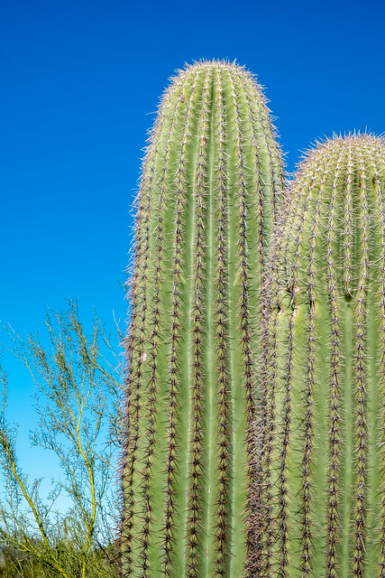 Saguaro, Tucson, Fujifilm X-E1, XF18-55mmF2.8-4 R LM OIS