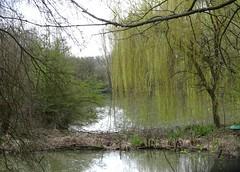 Annœullin (Don) les marais (3) - Photo of Camphin-en-Carembault