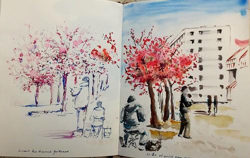 La rue Armand Guillemot, avec les cerisiers croqueurs et les copains en fleurs