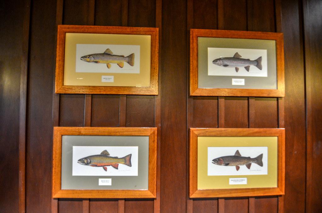 Fish photos Roaring Fork