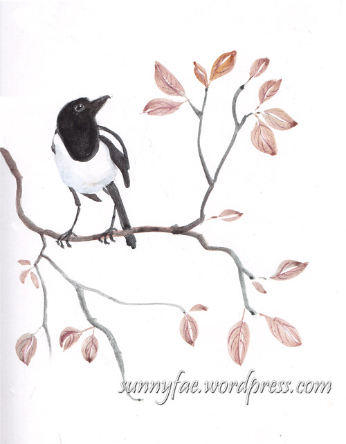 Magpie on a branch