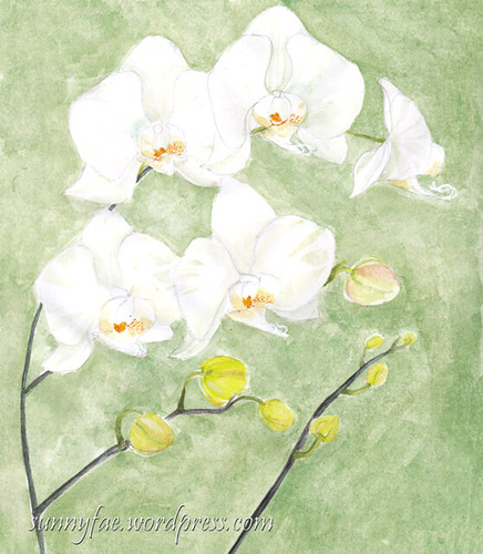 white orchids on a green background