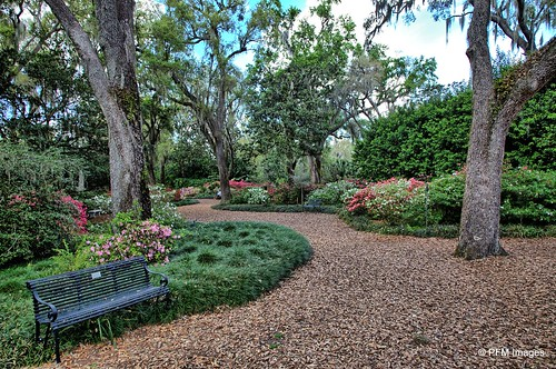 boktowergardens garden flowers azaleas bloom blossom path trees nature plants bench outdoor landscape botanical tree leaves spring canon eos slr 6d
