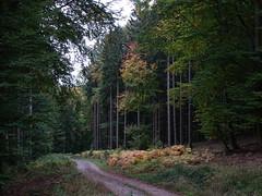 Le chemin de la Baraque - Photo of Oberhaslach