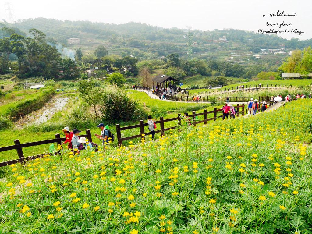 台北貓空樟樹步道樟湖步道怎麼去魯冰花海 (5)
