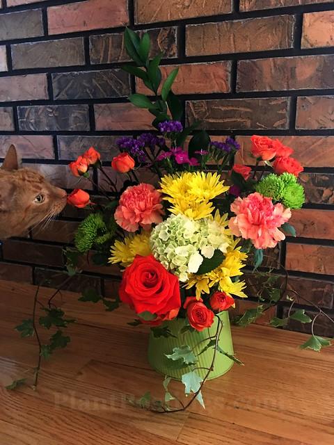 vase with cat