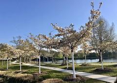 Parc de Marjolan (Blanquefort) - Photo of Saint-Aubin-de-Médoc