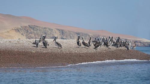 Pelicans place (explore)