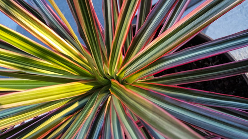 Patterned Vegetation (in Explore)
