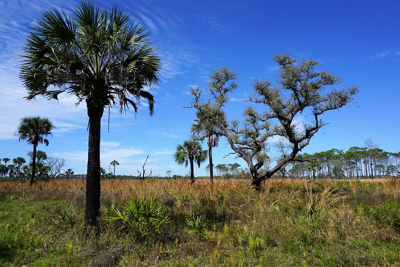 Myakka River State Park's Wilderness Preserve - Hike to Deep Hole, March 3, 2019