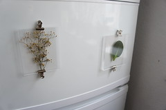 herbarium fridge magnets DSC06289