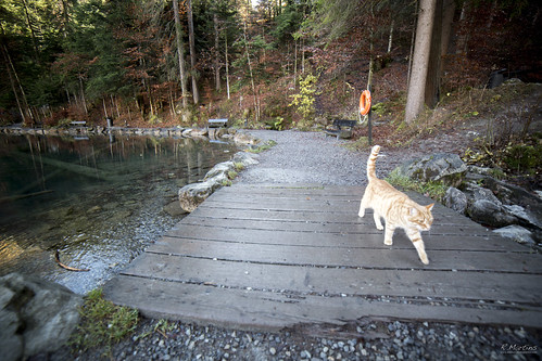 Blausee's cat