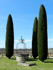 Cyprès et puits - Photo of Ordonnac