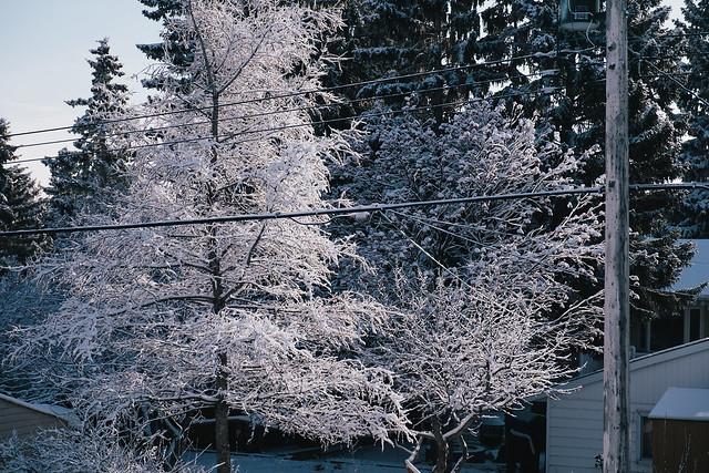 Hoarfrost in Calgary - 2019-9