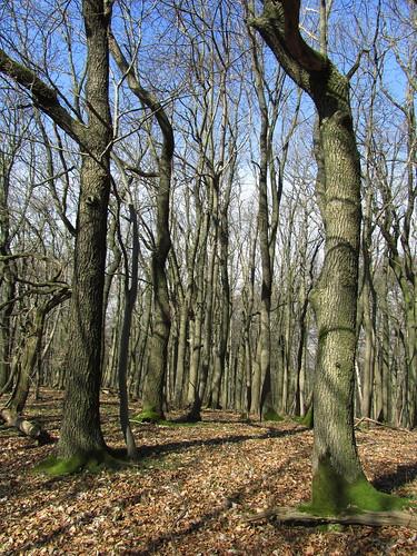 20110321 0208 384 Jakobus Wald Bäume