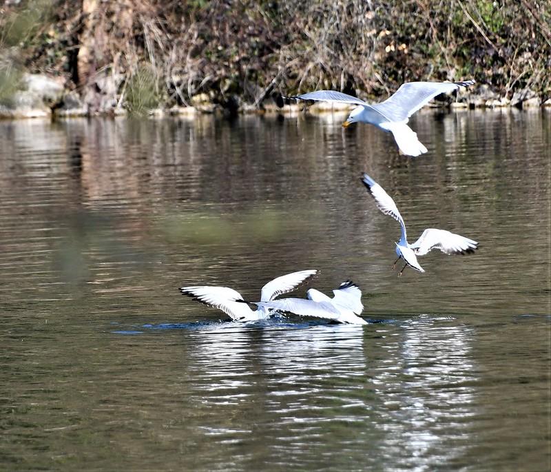 Ducks 30.03 (14)