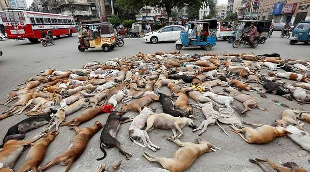 4923 Is it permissible to kill stray dogs in Islam 01