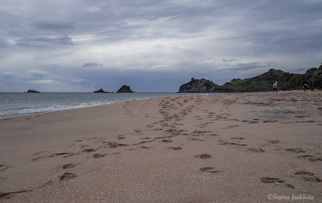 Hahei Beach in the Coromandel Peninsula