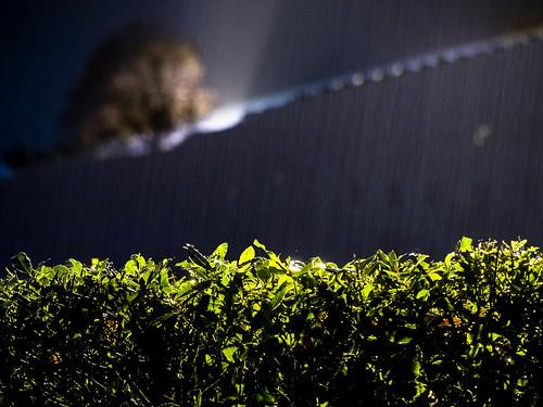 Foglie bagnate dalla pioggia