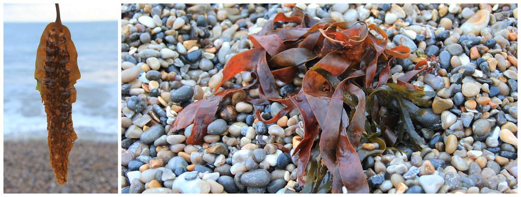 Seaweed, Branscombe Beach