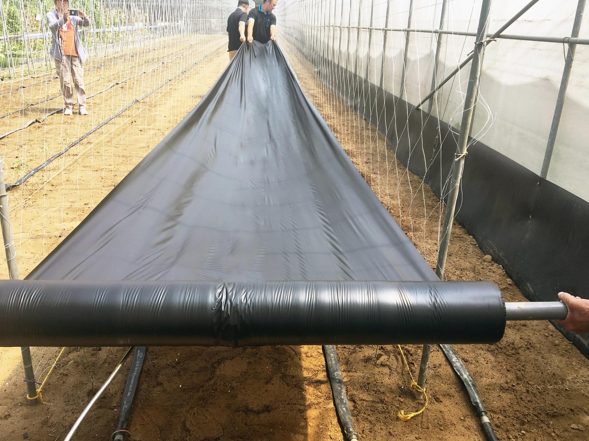 新型的可分解農地膜進行舖膜作業 圖片來源:農業委員會公關科