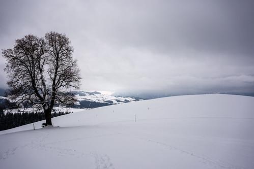 Wachseldorn, Einzelbaum, Winter