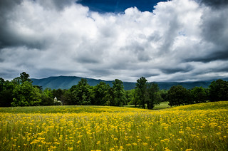 Golden Cades Cove Field and Church