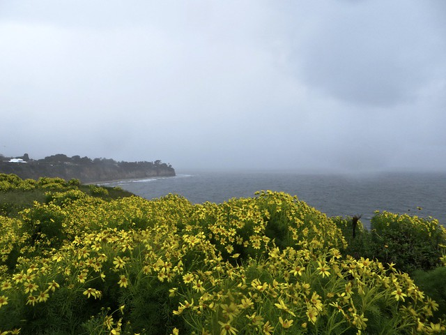 Point Dume headlands in the rain