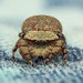 A Jumping spider like crab (5x3mm) handstack 19 shots by thengoctran19