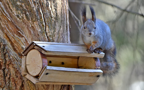- I'm sorry to bother you. But the feeder is empty!