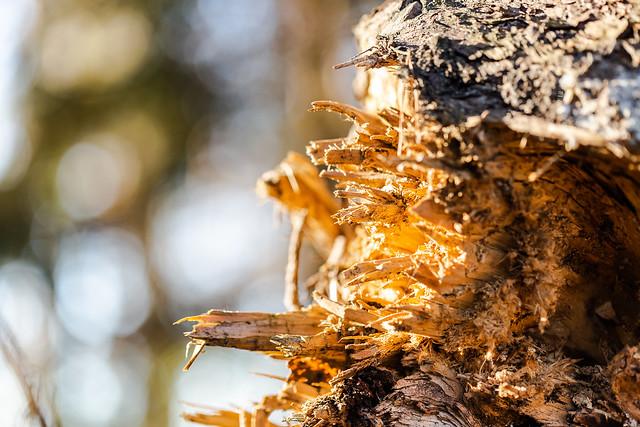 Baumsplitter
