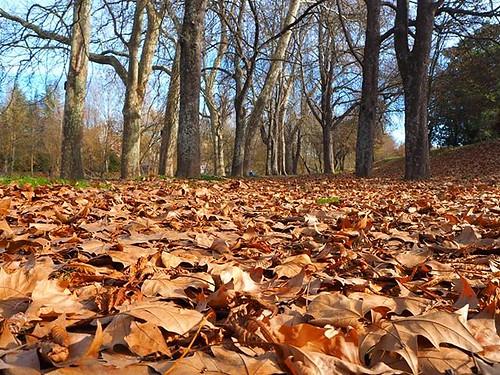 Cambiando la perspectiva a ras de suelo. #paseodelarga #paseodelargapamplona #pamplona #navarra #hojarasca #xmas #olympus