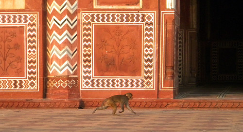 A monkey races by the red sandstone mosque beside the Taj Mahal in Agra, India