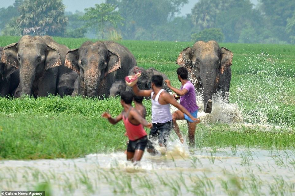 Familia-de-elefantes-persiguen-aldeanos