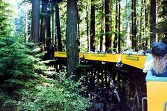 USA, la Californie, le train vapeur circule sur un pont dans la forêt de séquoias