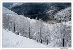 Nieve en Quinto Real... **Navarra**