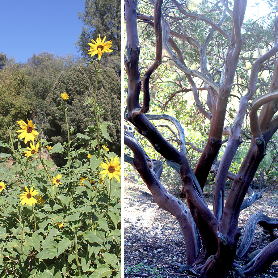 Rancho-Santa-Ana-Botanical-Gardens-Walk-7