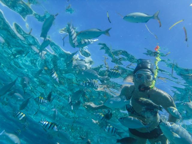 Tarja snorkelling
