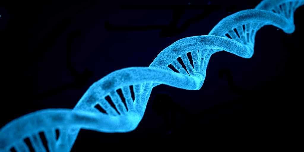 Des scientifiques demandent un moratoire sur l'édition des gènes