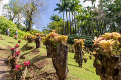 Martinique . --  Fort-de France