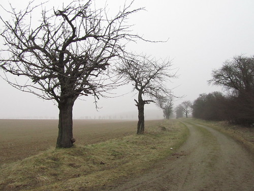 20110316 0203 090 Jakobus Weg Feld Allee Bäume