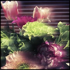 Rosen Tulpen Nelken